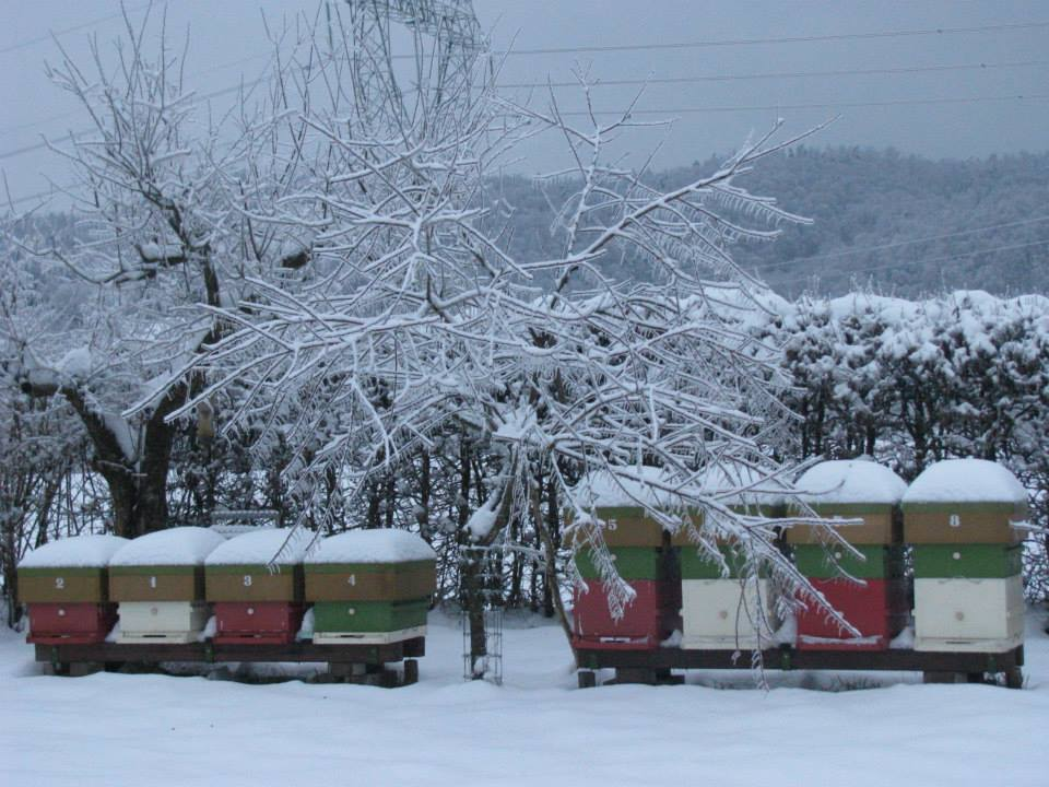 photo-slovenie-froid