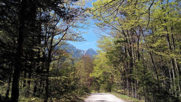 Valley-planica-small