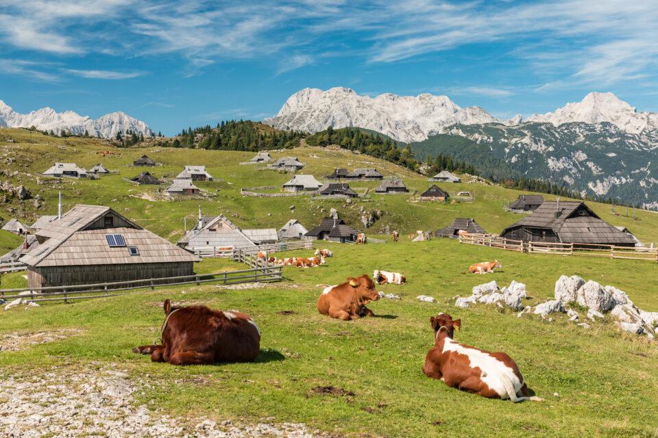 le hameau de Velika Planina, situé à 1600 mètres sur un alpage verdoyant.